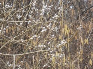 Fiori d'inverno